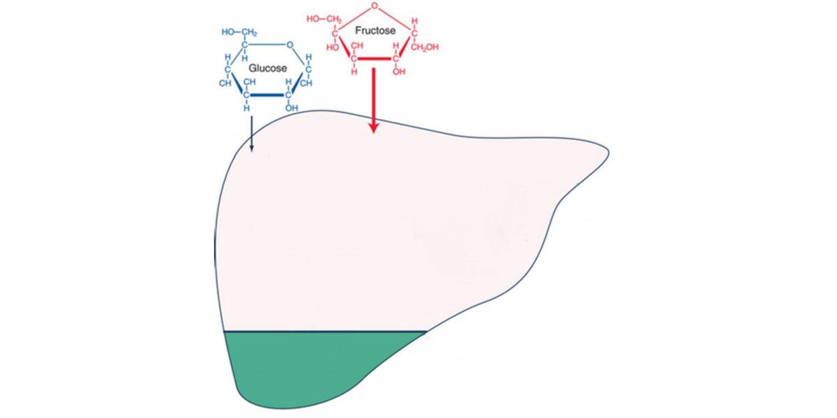Glucosa vs Fructosa
