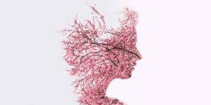 Las Mejores Hierbas para Mejorar la Memoria