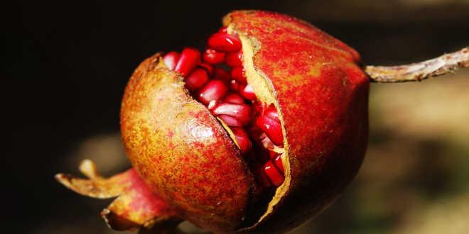 Fruto de granada