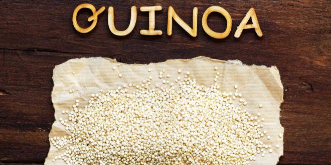 Quinoa alimento para perder peso