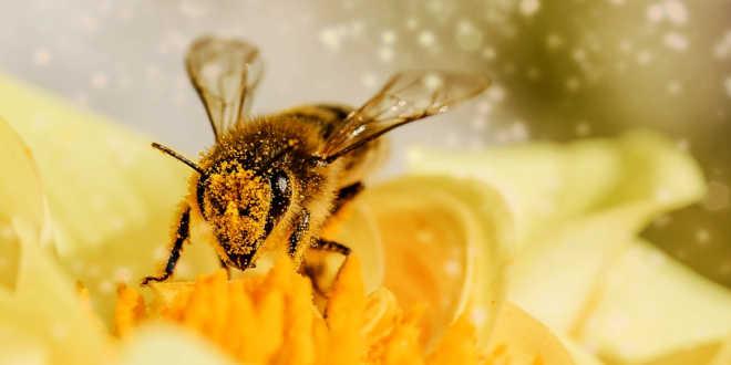 Alergias por polen