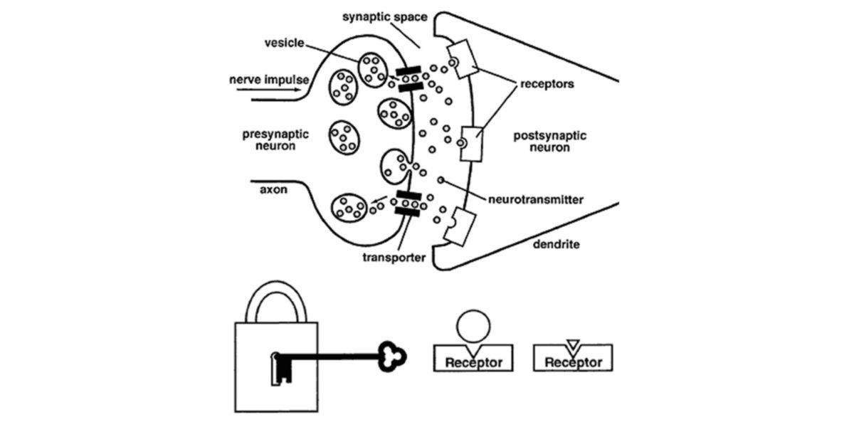 Sinapsis química y metáfora del modelo llave-cerradura