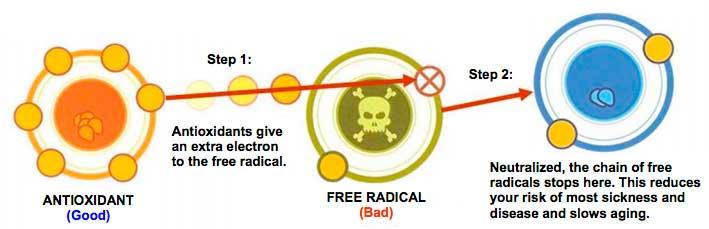 Antioxidantes neutralizan los efectos de los radicales libres