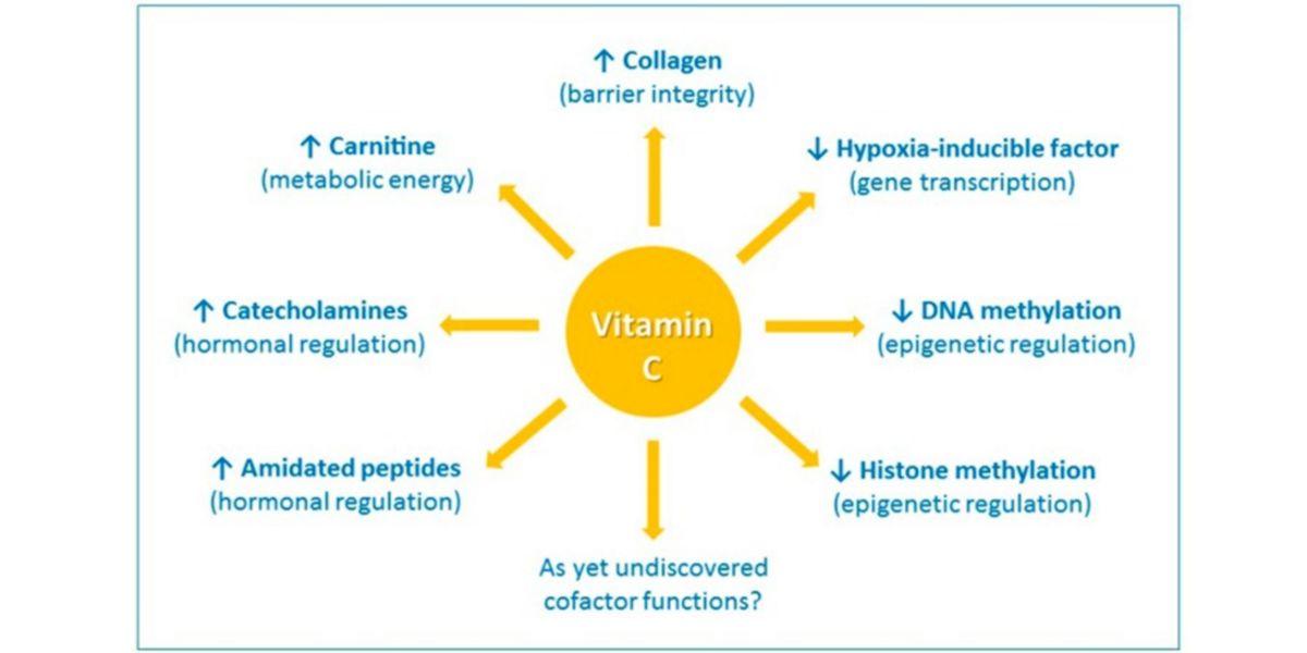 Efectos de la vitamina C