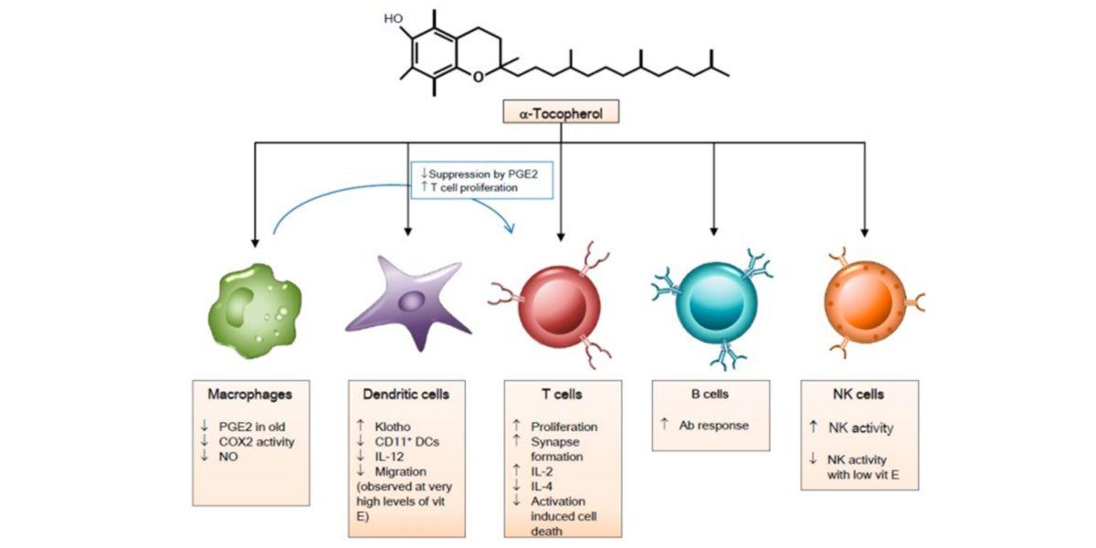 Efectos de la vitamina E