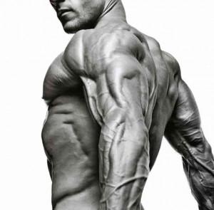 masa-muscular_6