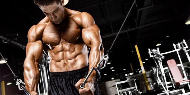 Oxigenación miofibrilar y crecimiento muscular