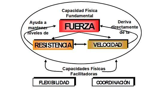 Diferencia entre rutina de fuerza y volumen