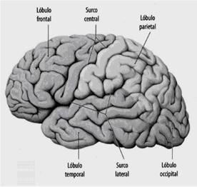 memoria-perceptiva