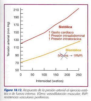 Presión arterial normal después de la tabla de ejercicios