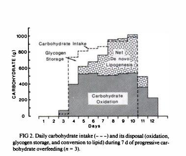 ingesta-de-carbohidratos-diarios