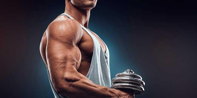 Protocolo HSN: Ganar Músculo Sin Apenas Grasa