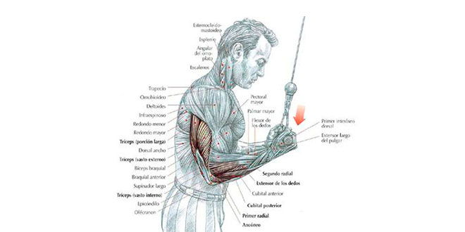 extesion-triceps