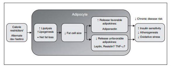 Gráfico Adipocito