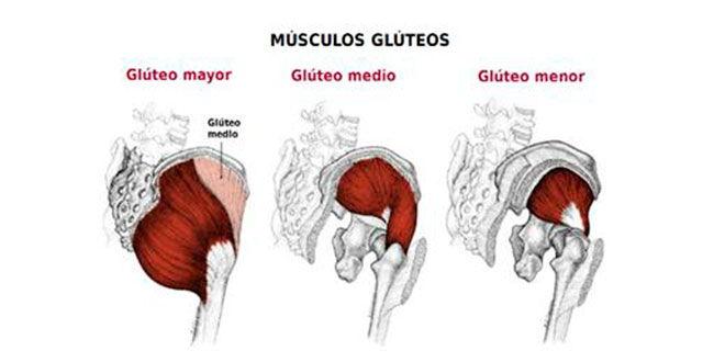 musculos-gluteos