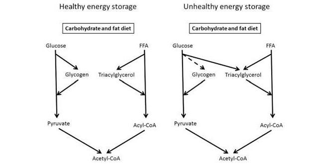 almacenar-energia-celular