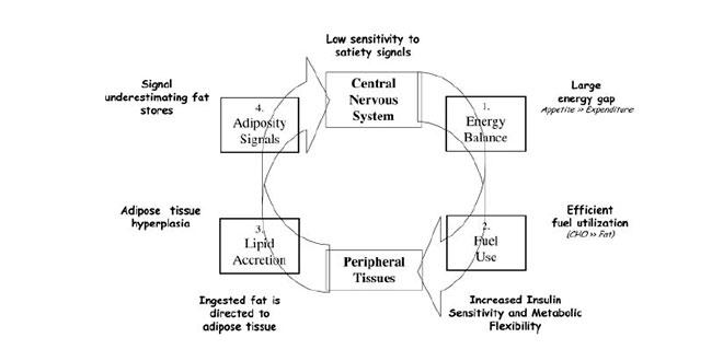 ciclo-de-hambre