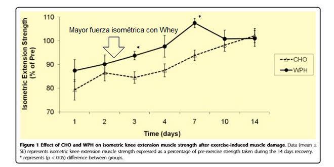 ¿Ayuda el Aislado de Proteína en la recuperación muscular?