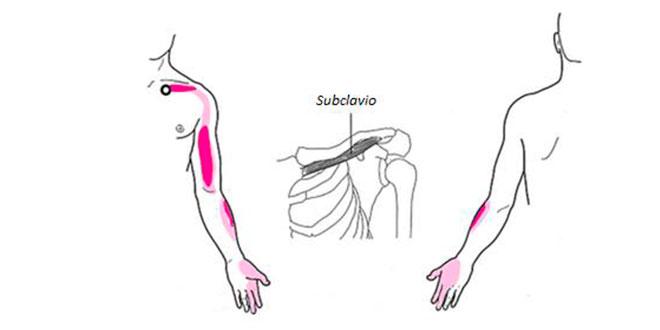 subclavio