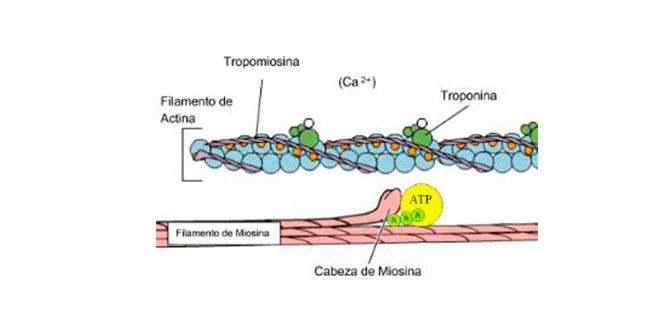 canales-calcio