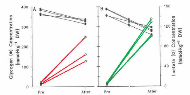 contraccion-muscular-fatiga