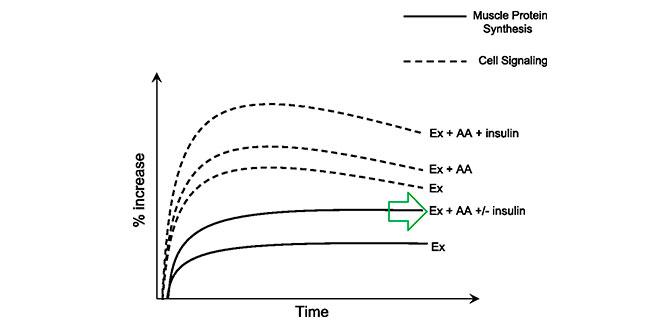 senalizacion-sintesis-proteica