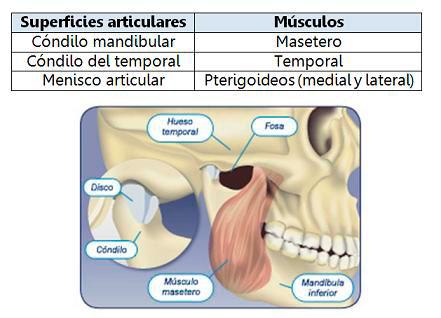 músculos mandíbula