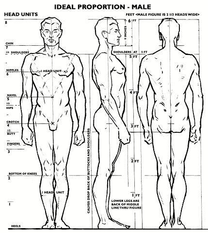 proporcion-masculina-ideal