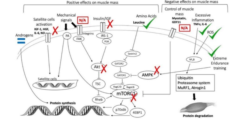 Mecanismos biomoleculares