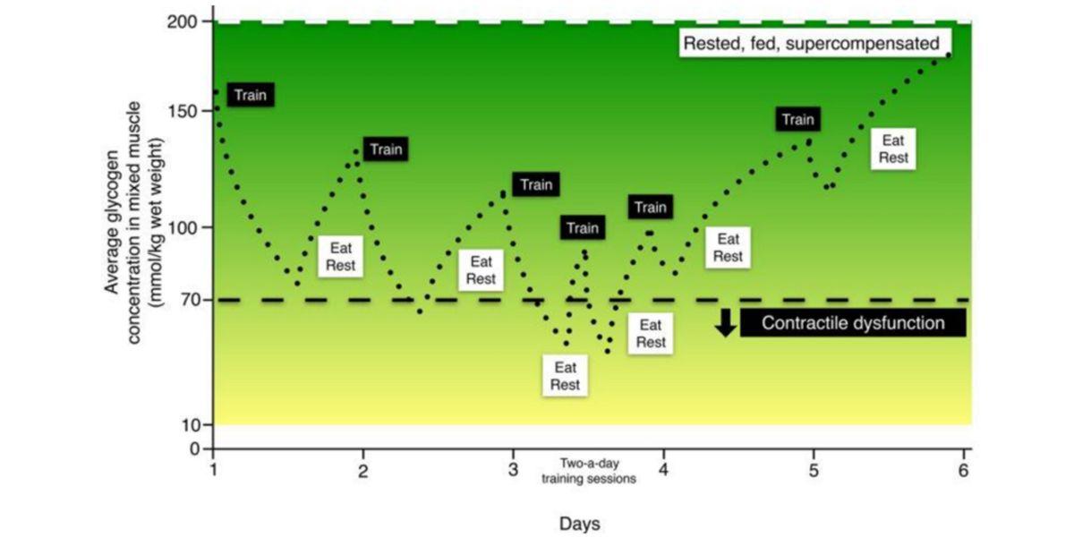 Concentraciones de glucógeno