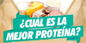 Cuál es la mejor proteína