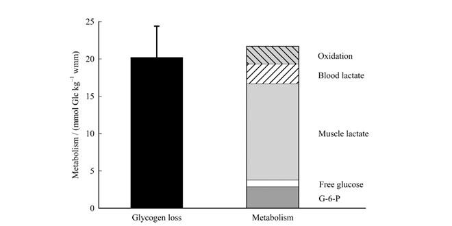 glucogeno-entrenamiento