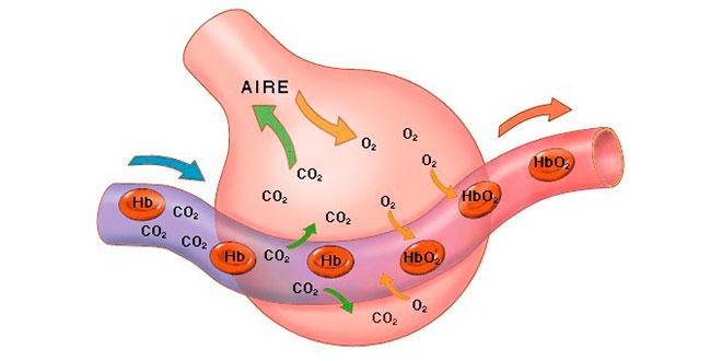 cociente-respiratorio