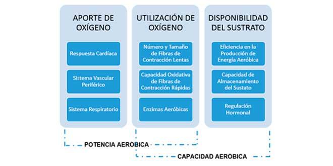 componentes-vias-aerobicas