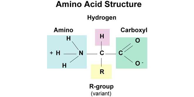 Estructura de aminoácidos