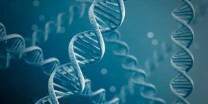 clasificación proteínas