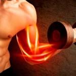 óxido nítrico y crecimiento muscular