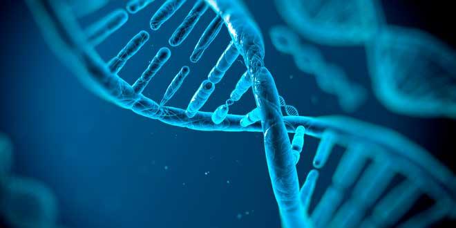 Primera Fase de la Sintesis de Proteinas