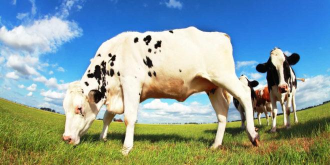 Proteínas de origen orgánico, ¿merecen la pena?