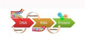síntesis proteínas