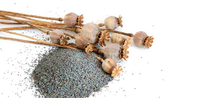 semillas-de-amapola-y-aplicacion