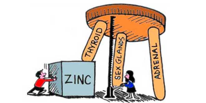 Importanza dello Zinco