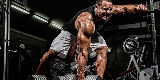 ¿Cuál es la máxima ganancia muscular posible?