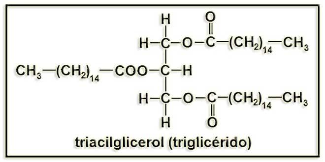 estructura molecular de los triglicéridos
