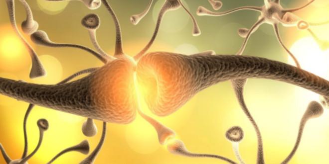 conexões dos neurotransmissores