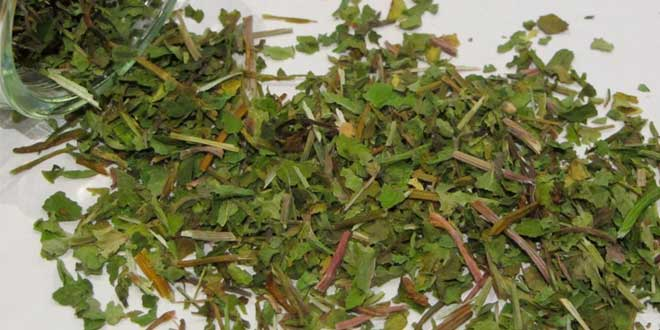 Centella asiática planta