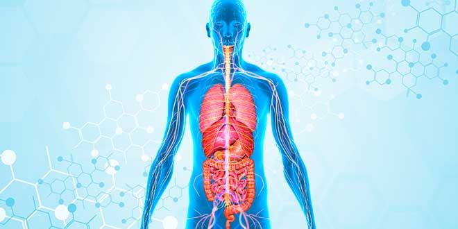 Probióticos mejoran la absorción de nutrientes