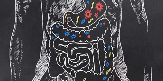 Função dos Probióticos