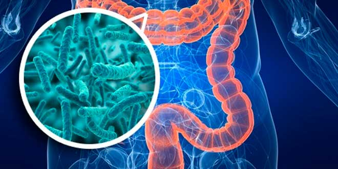 Microbiótica intestino