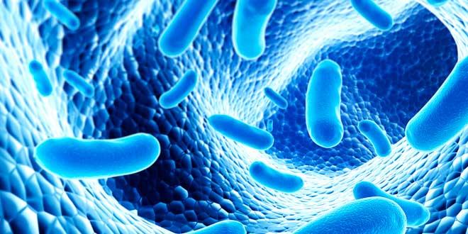 O que são os Probióticos